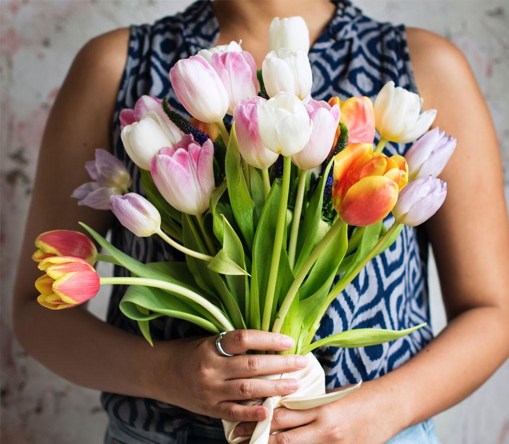 alt tulipany wholandii